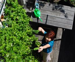 デッキでガーデニング|新宿の工務店大栄工業の注文住宅
